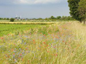 Ökologische Aufwertung einer ungenutzten Fläche in Blatzheim