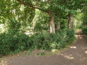 Dringende Baumpflege im Burgpark Bergerhausen